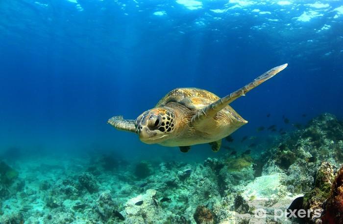Sticker pour armoire Tortue de mer verte nageant sous l'eau - Autres Autres