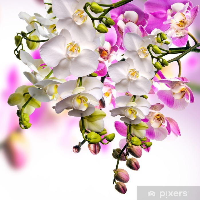 Pixerstick Sticker Wellness-Orchideen - Thema's
