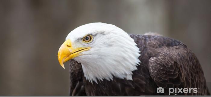 Sticker Pixerstick Majestic Bald Eagle - Thèmes