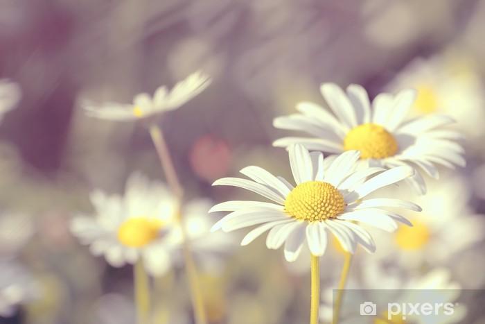 Nálepka Pixerstick Sedmikráska kvetoucí pastelové barvy - Roční období