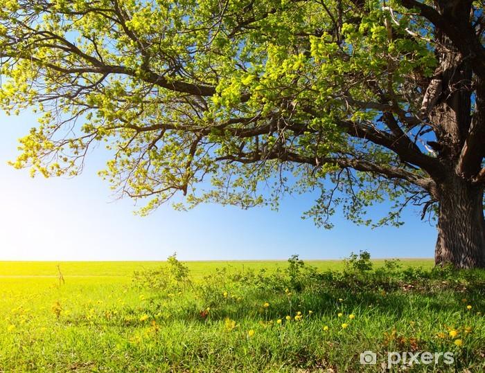 Fototapeta winylowa Majestatyczne drzewo - Przeznaczenia