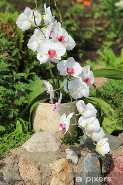 Vinyl-Fototapete Orchidee - Jahreszeiten