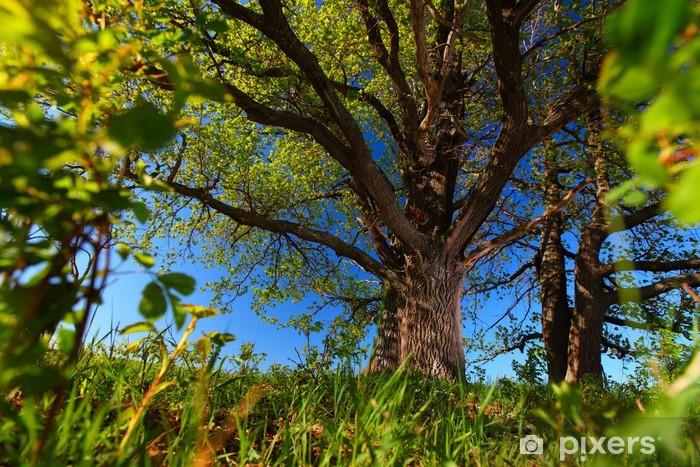 Naklejka Pixerstick Drzewo - Rolnictwo