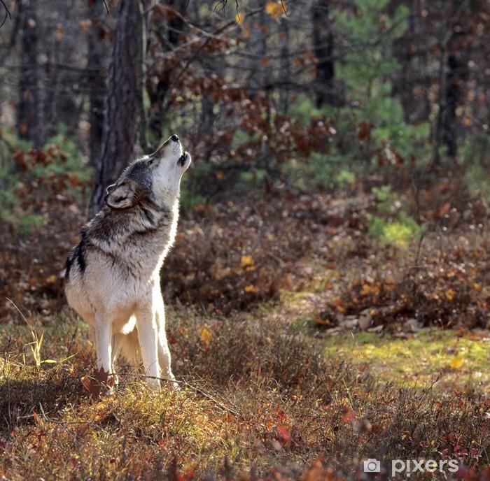 Papier peint vinyle Le loup gris hurlant - Thèmes