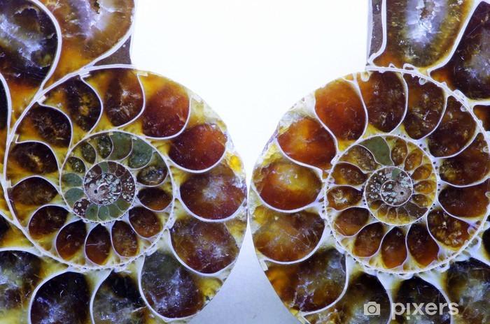 Fototapeta winylowa Amonit - Zwierzęta żyjące pod wodą