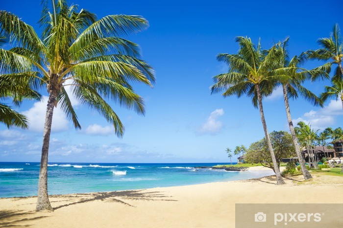 Palm trees on the sandy beach in Hawaii Pixerstick Sticker - Palm trees
