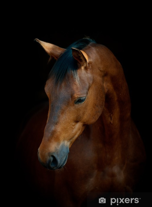 Vinyl Fotobehang Paard op zwart -