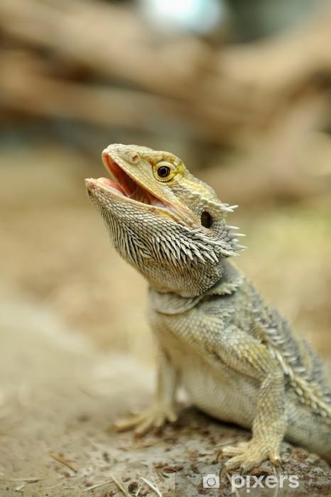 Fototapeta winylowa Brodaty Dragon Lizard - Fikcyjne zwierzęta