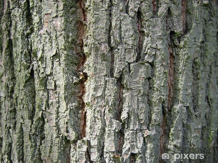 Fotomural Estándar Árbol de textura - Texturas