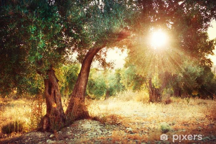 Fototapeta winylowa Drzewa oliwne - Tematy