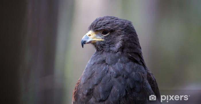 Naklejka Pixerstick Harris Hawk - Ptaki