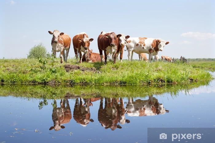 Pixerstick Aufkleber Junge Kühe auf einer Wiese - Säugetiere