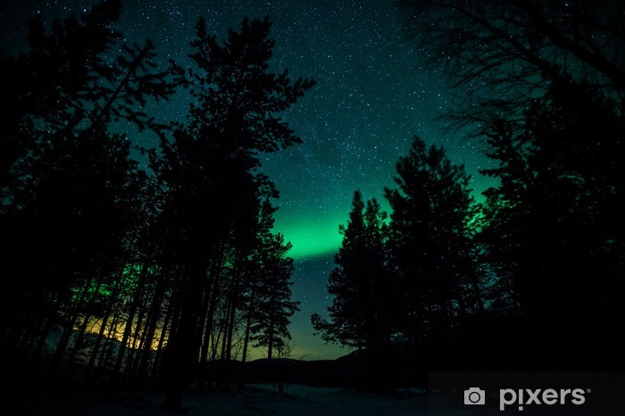 Northern lights above trees in Sweden Vinyl Wall Mural - Themes