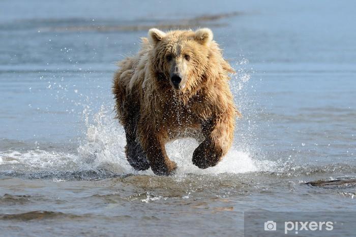 Sticker Pixerstick Grizzly Ours pêche dans les eaux côtières - Thèmes