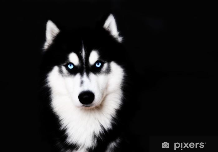 Close Up On Blue Eyes Of A Dog Siberian Husky Sticker Pixerstick