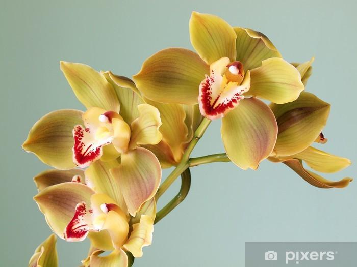Sticker Pixerstick Belle orchidée Cymbidium - Thèmes