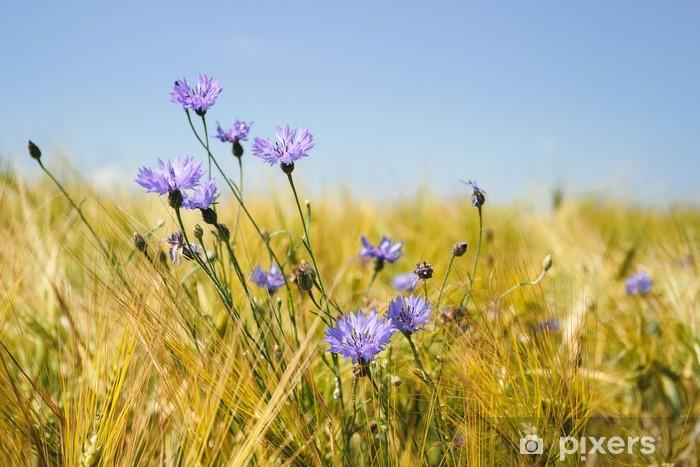 Sticker Pixerstick Bleuets dans le champ de blé - Bleuets