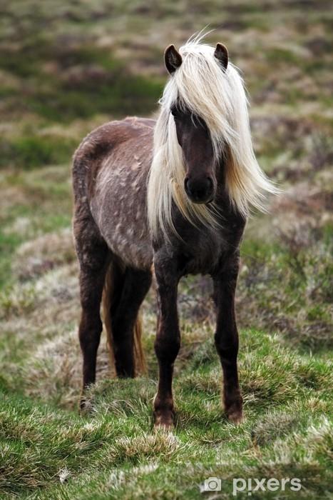 Iceland horse Pixerstick Sticker - horses