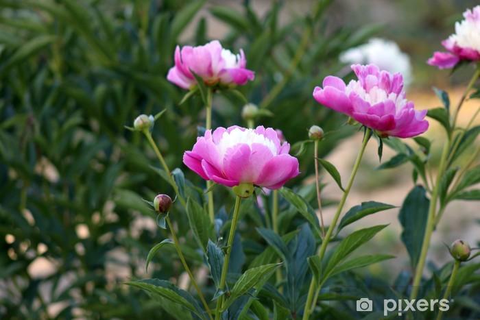 Sticker Pixerstick Pivoines - Fleurs