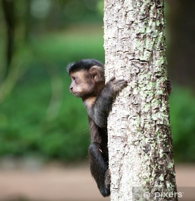 Nálepka Pixerstick Smyčková Kapucínský na stromě - Savci