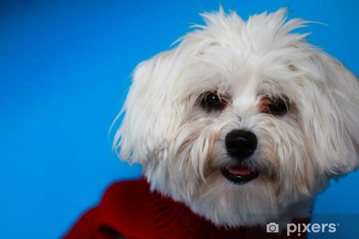 Papier peint vinyle Puppy - portrait de chien maltais - Mammifères