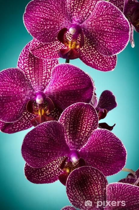 Vinilo para Nevera Purple Orchid -
