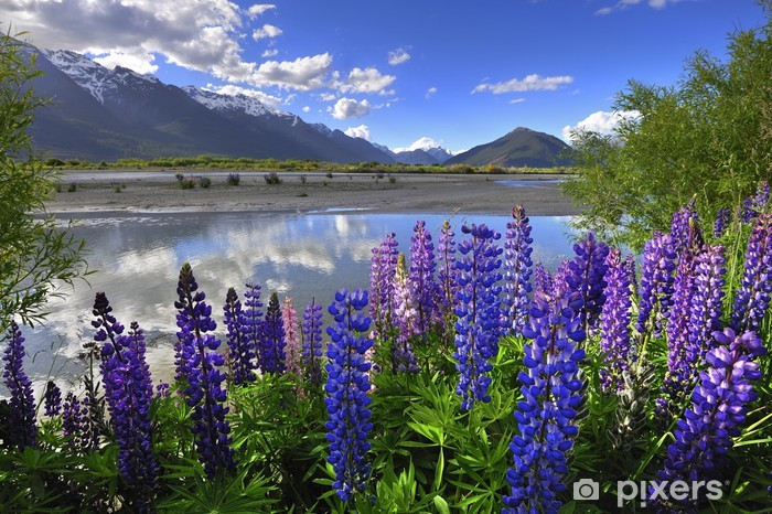 Lupines on the shore of the river in New Zealand Vinyl Wall Mural - Oceania