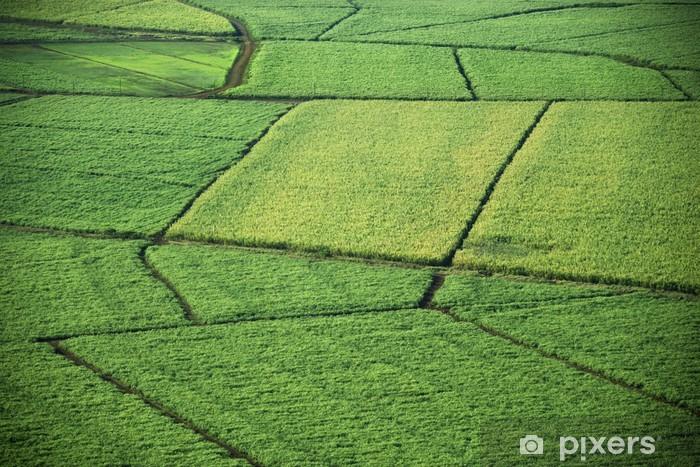 Fototapeta winylowa Aerial pól uprawnych. - Rolnictwo