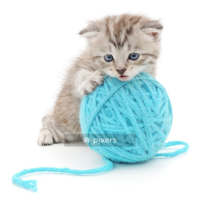 Cat with ball of yarn Wall Decal - Mammals