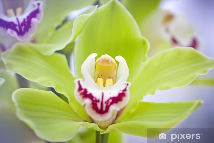 Sticker Pixerstick Belles orchidées - Thèmes