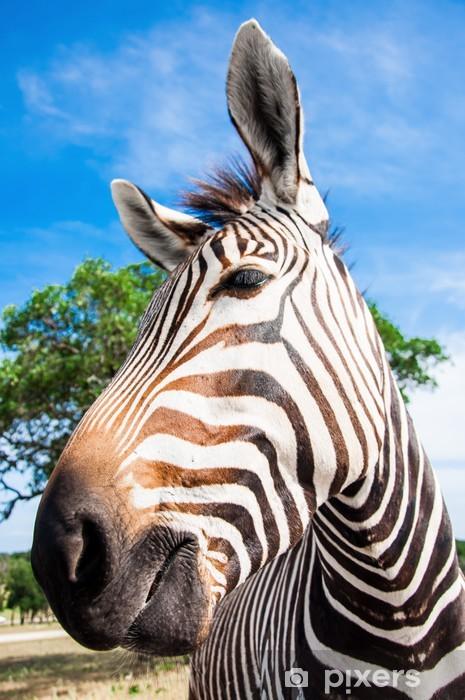 Fototapeta winylowa A zebra portrait Grevy'ego - Tematy