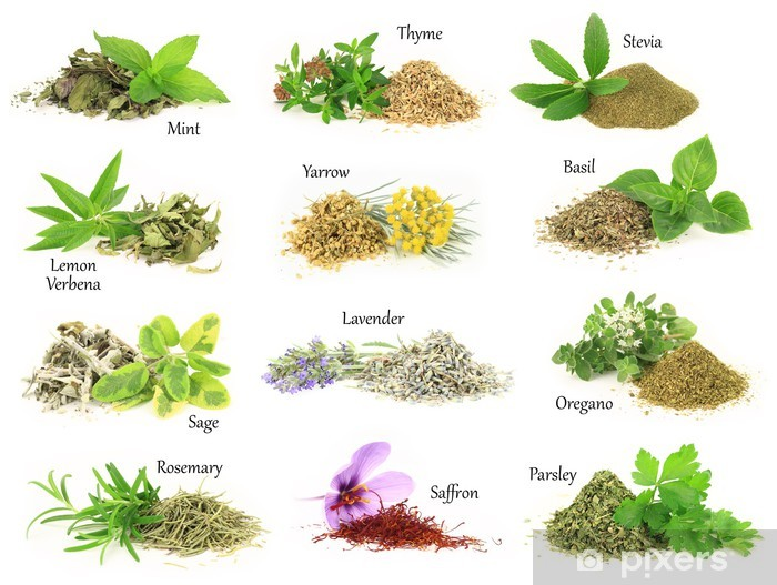 Collection of fresh and dry aromatic herbs Vinyl Wall Mural - Herbs