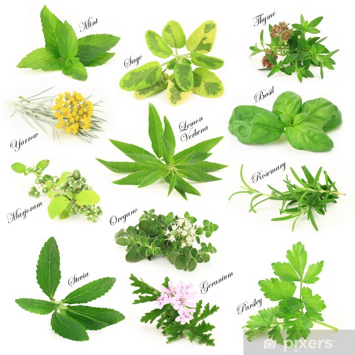 Collection of fresh aromatic herbs Vinyl Wall Mural - Herbs