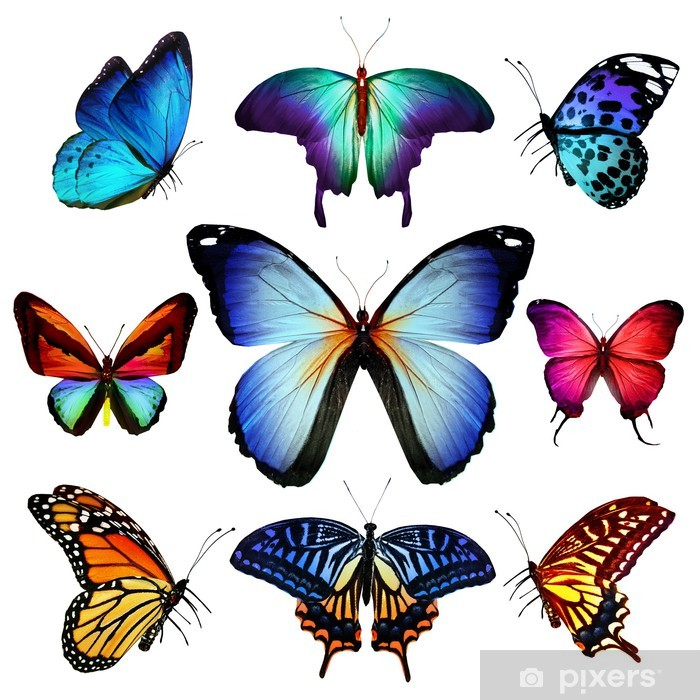 Many different butterflies flying, isolated on white background Vinyl Wall Mural - Other Other