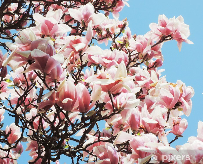 Sticker Pixerstick Magnolia - Thèmes