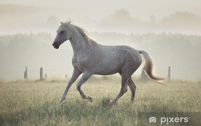 Zelfklevend Fotobehang Gevlekte witte paard loopt door de wei - Stedelijk