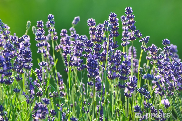 Lavendel Pixerstick Sticker - Seasons
