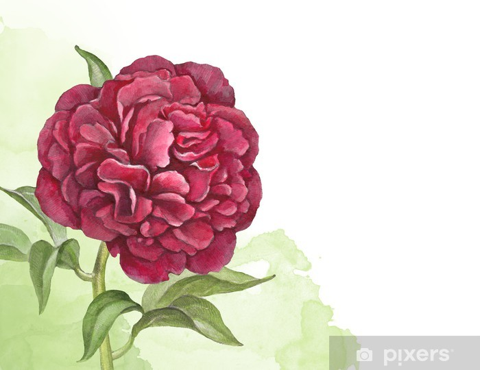 Watercolor Background With Illustration Of Peony Flower Wall Mural