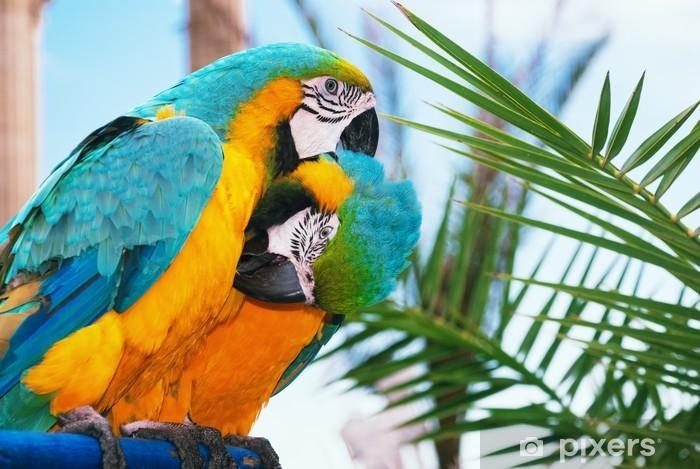 Carta da Parati in Vinile Blu-e-giallo Macaw - Temi