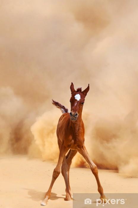 Arabialainen varsa, joka loppuu autiomyrskystä Vinyyli valokuvatapetti - Aavikot