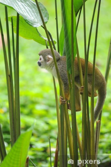 Vinyl Fotobehang Doodshoofdaapje in Amazonië regenwoud - Amerika