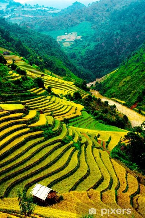 Pixerstick Klistermärken Risfälten i radhus i Vietnam - Ängar, åkrar och gräs