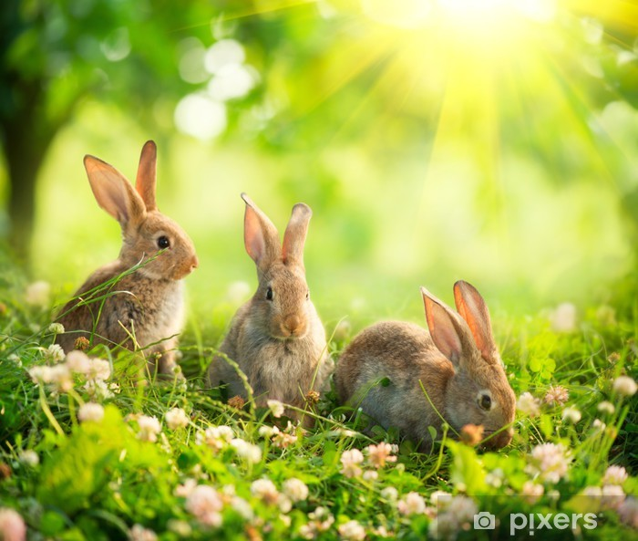 Rabbits. Art Design of Cute Little Easter Bunnies in the Meadow Poster - Rabbits