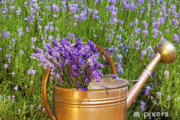Lavendel in einer Kupfergießkanne Vinyl Wall Mural - Home and Garden