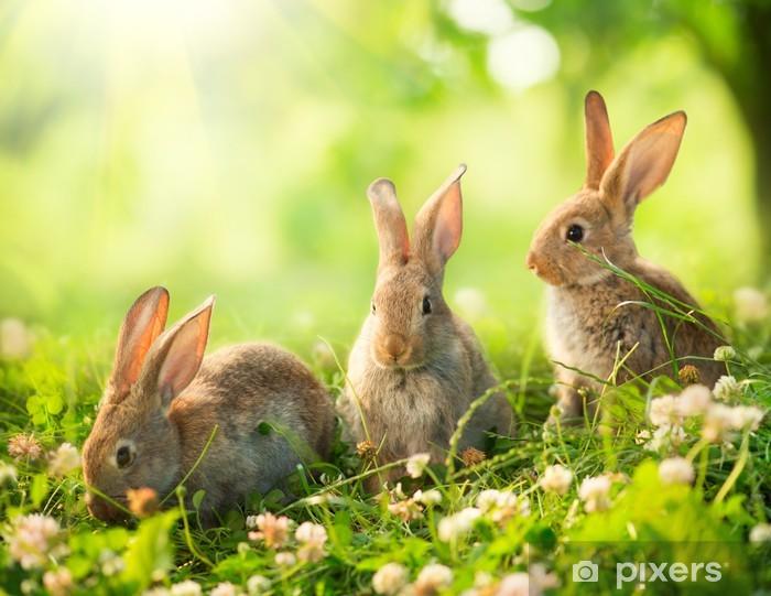 Fotomural Estándar Conejos. Diseño de Arte de lindos conejitos de Pascua en el Prado. - Conejos
