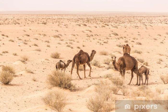 Papier Peint Chameaux Dans Le Desert Du Sahara En Tunisie Pixers