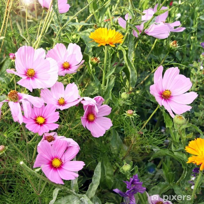 Fototapeta winylowa Cosmea kwiat łąki - Krajobraz wiejski
