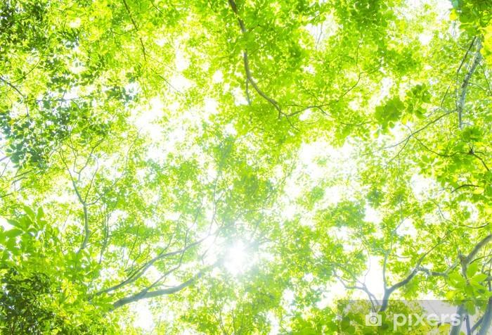 Vinylová fototapeta New Green - Vinylová fototapeta