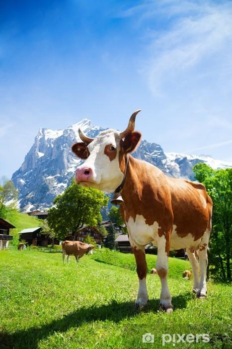Fototapeta winylowa Szwajcaria krowa - Ssaki