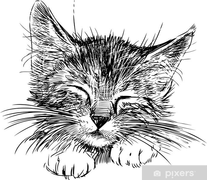 Fototapeta winylowa Kot śpi - Naklejki na ścianę